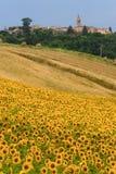 Marsen (Italië) - Landschap bij de zomer Stock Fotografie