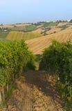 Marsen (Italië) - Wijngaarden stock fotografie