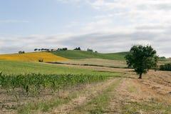 Marsen - Landschap bij de zomer, landbouwbedrijf stock afbeeldingen