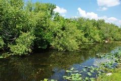 Marsh Stock Image