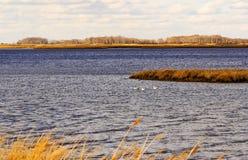 Marsh Fotografering för Bildbyråer