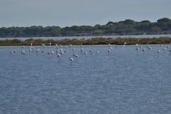 marsh Arkivfoto
