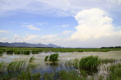 Free Marsh After The Rain Royalty Free Stock Image - 19309196