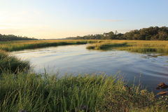 Free Marsh And Grasses Stock Photos - 44374893