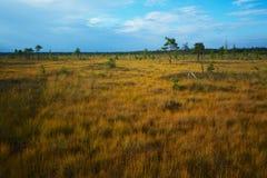 Marsh in autumn Stock Photo