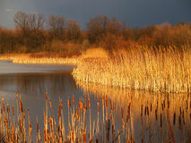 Marsh Before A Storm - Pennsylvania Stock Images