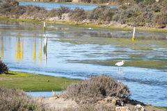 Marsh birds in Puerto Real, Cadiz, Spain Royalty Free Stock Photography