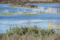 Marsh birds in Puerto Real, Cadiz, Spain Stock Images