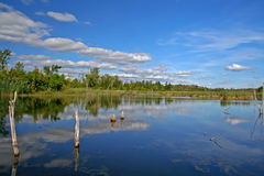 Marsh in Bizard Island Royalty Free Stock Photography