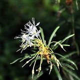 Marsh blossom Stock Photo