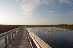 Marsh Boardwalk Stock Photos
