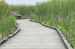 Marsh boardwalk Stock Images