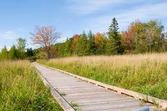 Marsh boardwalk in fall Stock Photography