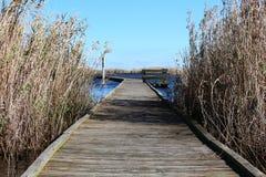 Marsh boardwalk between grass Stock Images