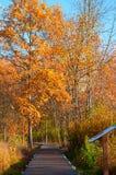 Marsh boardwalk Stock Photography