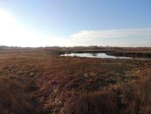 Marsh bog royalty free stock photo