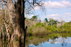 Marsh in Cambodia. The beauty of the Marsh in Cambodia Royalty Free Stock Images