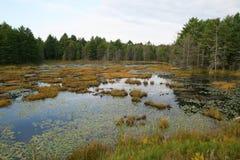 Marsh Canada Lizenzfreies Stockbild
