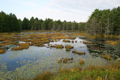 Marsh Canada Royalty Free Stock Image