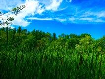 Marsh Royalty Free Stock Photography