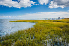 Marsh in Charleston, South Carolina. Royalty Free Stock Photos