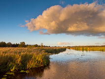 Marsh Country Netherlands Royalty Free Stock Photos