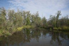 Marsh Creek Stock Images