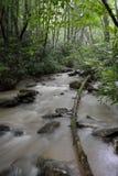 Marsh Creek in Twin Falls State Park, WV Stock Image