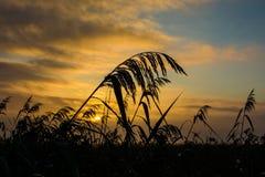 Marsh dawn Royalty Free Stock Photo