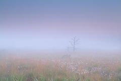 Marsh in dense fog Royalty Free Stock Photos