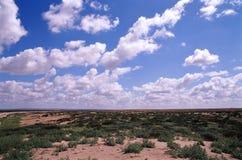 Marsh desert royalty free stock images