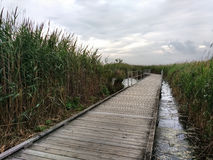 Marsh Discovery Trail Kingsland liten vik, Hackensack flod, Meadowlands, NJ, USA Royaltyfri Foto