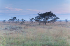Marsh with dry trees in spring Royalty Free Stock Photo