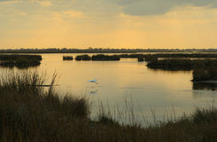 Marsh at dusk royalty free stock photo