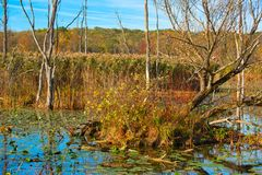 Marsh ecosystem in autumn. Detail of the lush ecosystem of Beaver Marsh in Cuyahoga Valley National Park Stock Photo