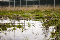 Marsh on expressway Royalty Free Stock Image
