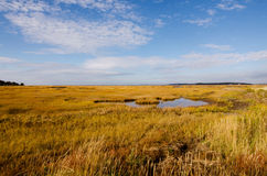 The Marsh in Fall Royalty Free Stock Images