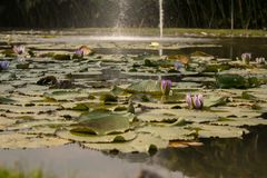 Marsh flower royalty free stock image