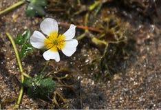 Marsh Flower Bloom Arkivfoto