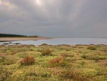 Marsh Flowers sulla spiaggia di Holkham Fotografia Stock