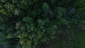 Marsh in the forest - Aerial shot. Marsh in the forest - Aerial shot in the real time stock footage