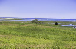 Marsh at the Fort Hill area in Wellfleet, MA Cape Cod. Marsh at the beautiful Fort Hill area with blue water and sky in Wellfleet, MA Cape Cod Royalty Free Stock Photography