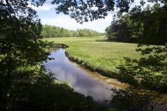 Marsh Framed durch Baumaste Lizenzfreie Stockfotografie