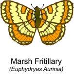Marsh Fritilary stock illustration