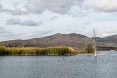 Marsh Grass dans le lac avec le fond des montagnes photos libres de droits