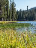 Marsh grass at forested, mountain lake Royalty Free Stock Photography