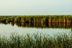 Marsh with grass reflecting in water at Royalty Free Stock Photo