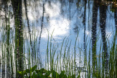 Marsh grass Stock Photos