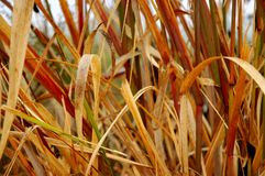 Marsh Grasses Stock Photo