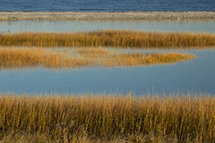 Marsh grasses at sunset in fall at Milford Point, Connecticut. Royalty Free Stock Photography